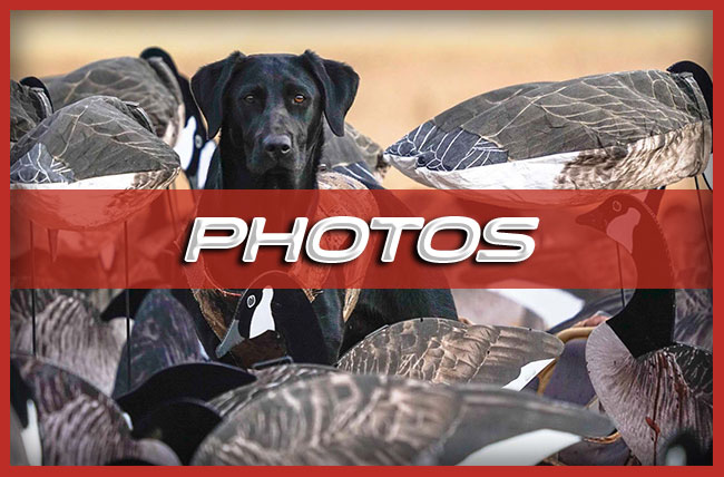 Final Descent Guide Services Lubbock Tx Waterfowl